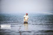 صید یک قطعه ماهی خاویاری در بندرکیاشهر