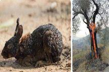 تصاویر خاکستر شدن گونههای جانوری مربوط به ارسباران نیست