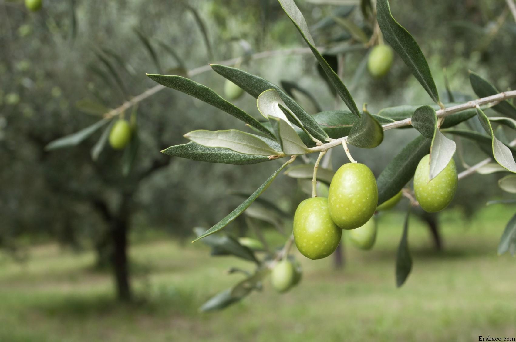 بهترین زمان برای هرس درختان میوه