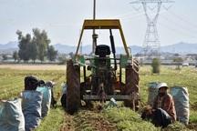 40 درصد مزارع گندم مهاباد زیر پوشش بیمه قرار گرفت
