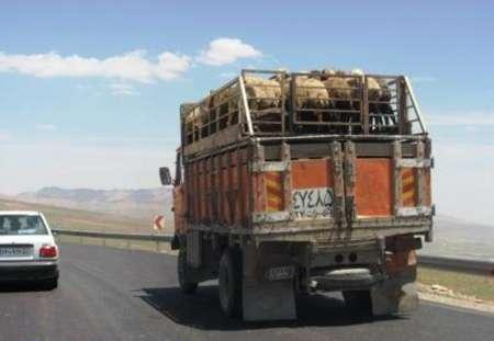 توقیف 212 محموله غیرمجاز دام در استان سمنان