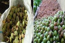افزایش 82 درصدی تولید بادام درباغات بروجرد