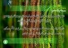 دعای روز بیستم ماه مبارک رمضان+ متن، صوت و ترجمه