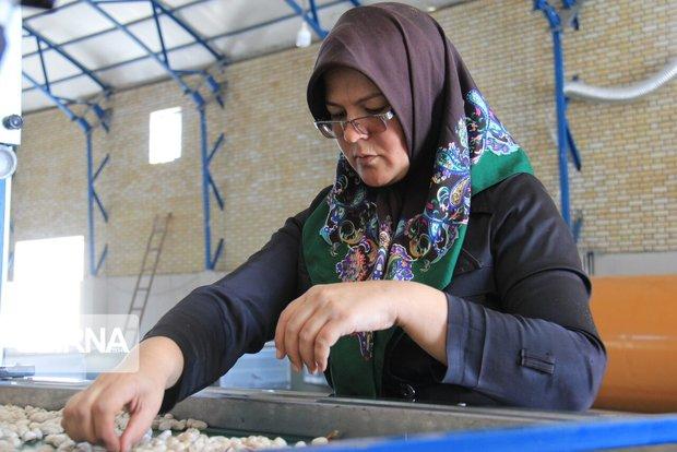 توسعه اشتغال خرد در روستاها،اولویت صندوق کارآفرینی امید است