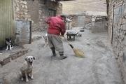 سایت نگهداری سگهای بلاصاحب در مهاباد راهاندازی شد