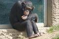 جزییات ماجرای مرگ شامپانزه در باغ وحش ارم