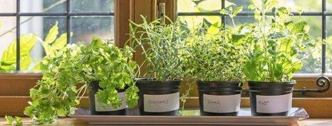 ۷ گیاهی که به خانه شما انرژی مثبت میدهد