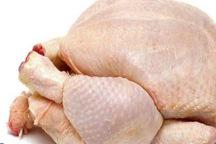 مرغ های مصرفی مردم آنتی بیوتیک و هورمون ندارند