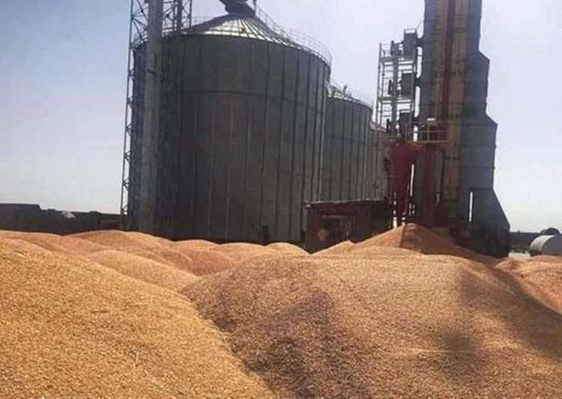 ۸۵ درصد بهای گندم خریداری شده کشاورزان زنجانی پرداخت شد