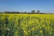 ظرفیتسازی برای گیاهان دارویی و صنعتی در مناسبات اقتصادی ضروری است