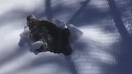 لحظهی بیدار شدن یک خرس گریزلی از خواب زمستانی