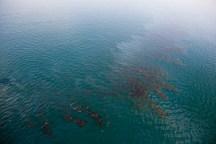مناطق مرده دریایی در آب های جنوبی کشور در حال افزایش است
