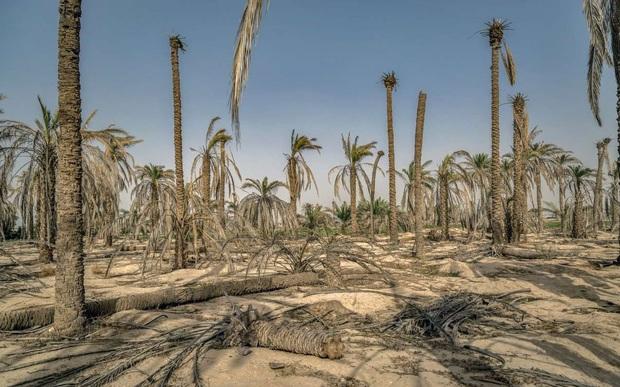 جدیدترین فاجعه محیط زیستی در ایران: کاهش چشمگیر حجم آب های زیرزمینی/ نگرانی یک فعال محیط زیست
