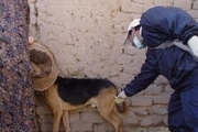 ۳ هزار قلاده سگ درهرمزگان علیه هاری واکسینه شدند