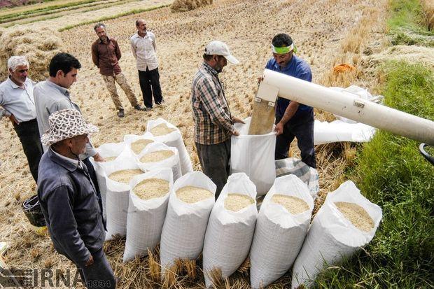 ضریب امنیت غذایی کشور به ۸۷ درصد رسید