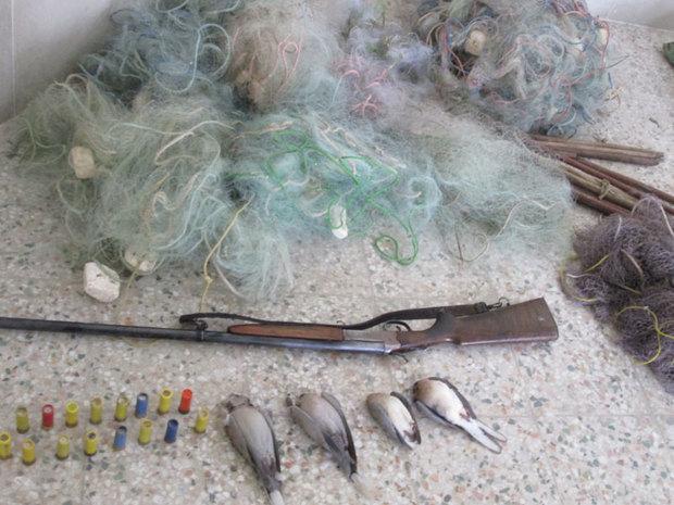 10 قطعه کبوتر وحشی شکار شده در لرستان کشف شد