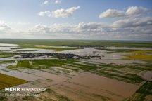 سیل  ۳۲۳ میلیارد ریال خسارت به کشاورزان لامردی وارد کرد
