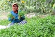 احیای تشکلهای زنان روستایی خراسان رضوی در دستور کار قرار گرفت