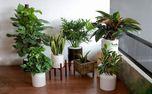 معرفی گیاهان مقاوم مخصوص فراموشکارها