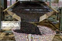 ضرورت برندسازی محصولات تولیدی گیلان منطبق با نیاز بازار