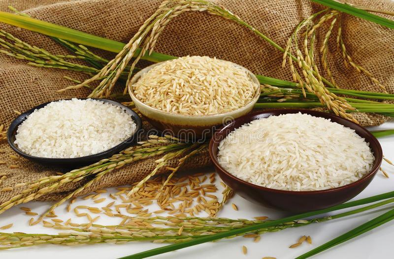 هزینه تولید برنج مازندران 28 هزار و 500 تومان است