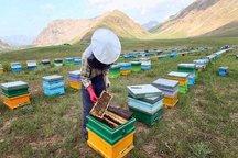 باران کام زنبورداران کردستانی را تلخ کرد