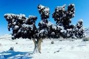 ثبت پنج اثر طبیعی قزوین در فهرست آثار ملی