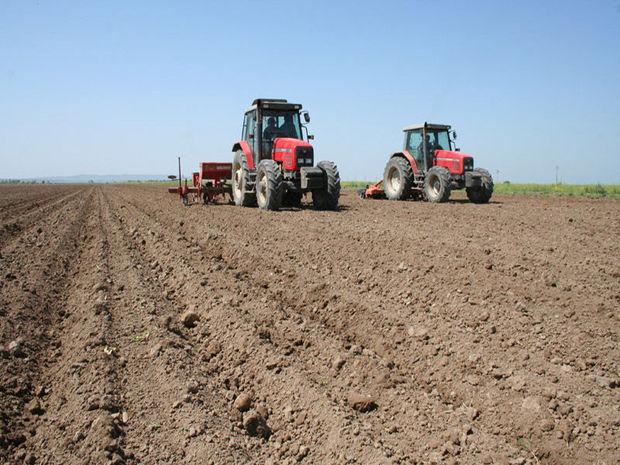 بیشاز ۲ هزار هکتار از زمینهای ایرانشهر به کشت گندم اختصاص یافت