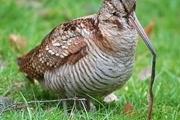 شکارچی پرنده ابیا به ارایه خدمات عمومی رایگان محکوم شد