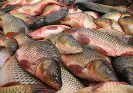 افزایش 10 درصدی تولید ماهی در مزارع پرورشی خراسان شمالی