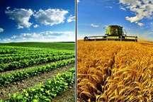 تولید محصولات راهبردی کشاورزی در سمنان امسال 30 درصد افزایش یافت