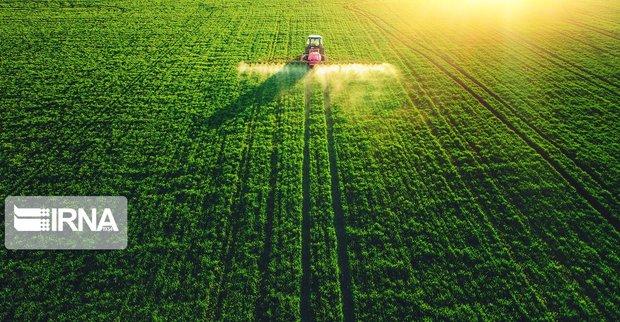 ۷۰ درصد اراضی کشاورزی فاقد سند است