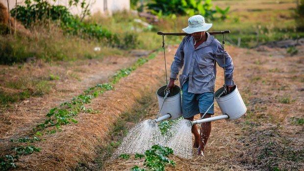 رفع مشکل بیکاری دانش آموختگان کشاورزی در اولویت باشد