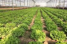 500 میلیاردریال تسهیلات اشتغالزا در بخش کشاورزی سلسله جذب شد