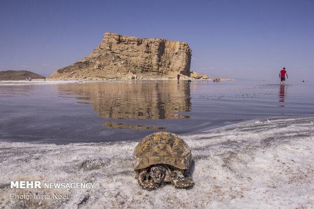 ۱۲۰۶میلیون لیتر آب سدها به دریاچه ارومیه رهاسازی شد