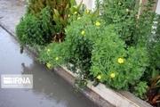 بیشترین بارندگی در حاجی آباد ثبت شد