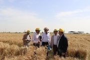 مجری طرح محوری گندم از هستههای بذری مرکز تحقیقات دزفول دیدن کرد