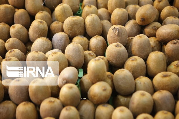 باغداران کیوی مازندران چوب حراج به محصول خود نزنند