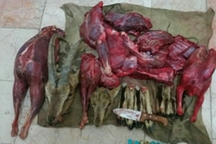 متخلف شکار و صید در نایین دستگیر شد
