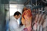 لاشه گاو مبتلا به زردی پاتولوژیک در فیروزکوه معدوم شد