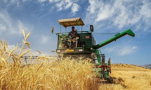 پیش بینی برداشت 700 هزار تن گندم از مزارع آذربایجان غربی