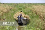 آغاز پرداخت تسهیلات بلاعوض به کشاورزان سیلزده خوزستان
