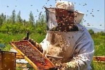 تولید عسل در تربت جام هفت درصد افزایش یافت