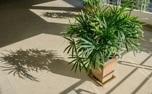 گیاه متناسب با شخصیت متولدین هر ماه