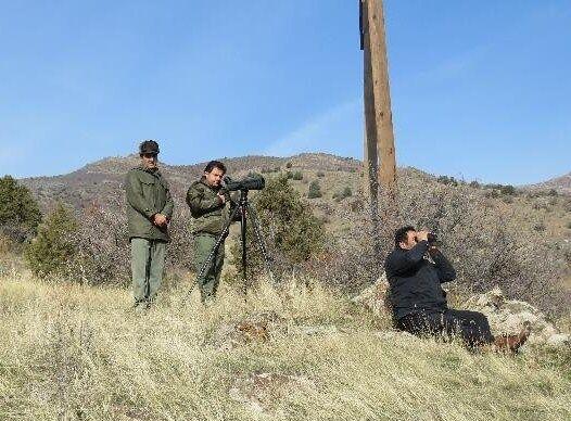 سرشماری پرندگان خشکیزی در استان اردبیل آغاز شد