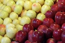 توزیع 45 تن میوه شب عید در حاجی آباد آغاز شد
