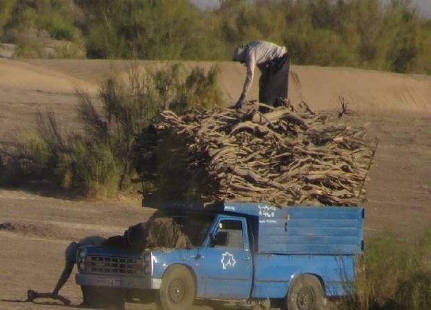 قاچاق چوب تاغ تاراج سرمایه ملی
