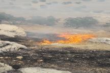 نیاز فوری به بالگرد برای مهار آتش سوزی جنگلهای شادگان و شاه بهرام