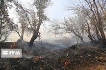 سه هکتار از مراتع مشجر گیلانغرب در آتش سوخت
