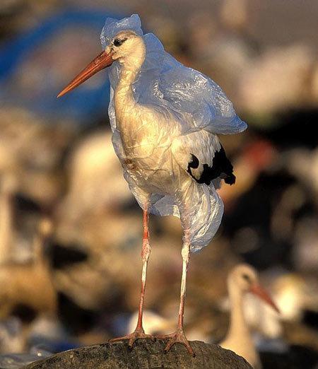 کیسه های پلاستیکی موجب خفگی جانوران می شوند